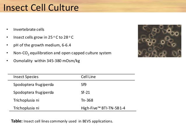 Types of Insect cell lines cells Doubling time Cell appearance Medium Origin Type of culture Sf 9 72 hrs Spherical, granul...