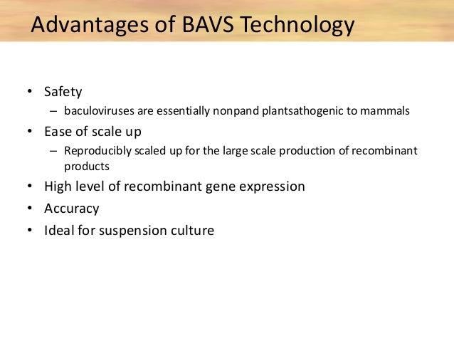 Baculovirus expression vector system