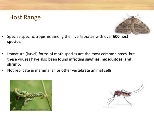 • Species-specific tropisms among the invertebrates with over 600 host species. • Immature (larval) forms of moth species ...