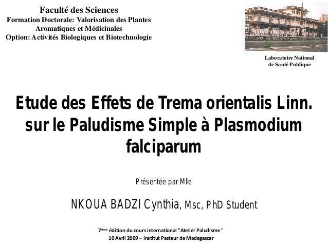 Etude des Effets de Trema orientalis Linn.sur le Paludisme Simple à PlasmodiumfalciparumPrésentée par MlleNKOUA BADZI Cynt...