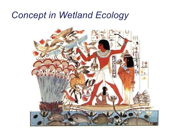 Concept in Wetland Ecology