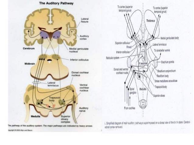 Anatomy of Ear and BERA with its technical aspects  by Murtaza  Marc…