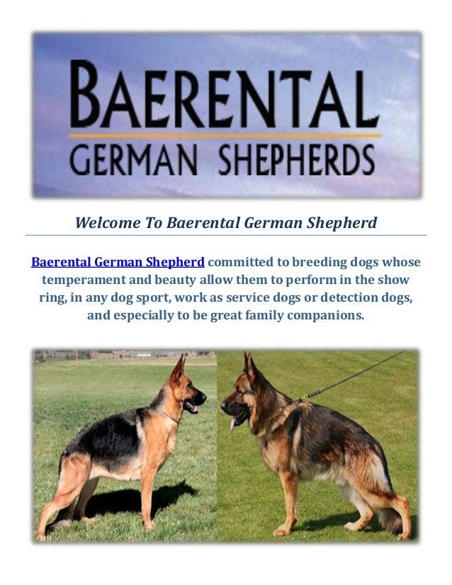 Baerental German Shepherd Puppies For Sale In Massachusetts