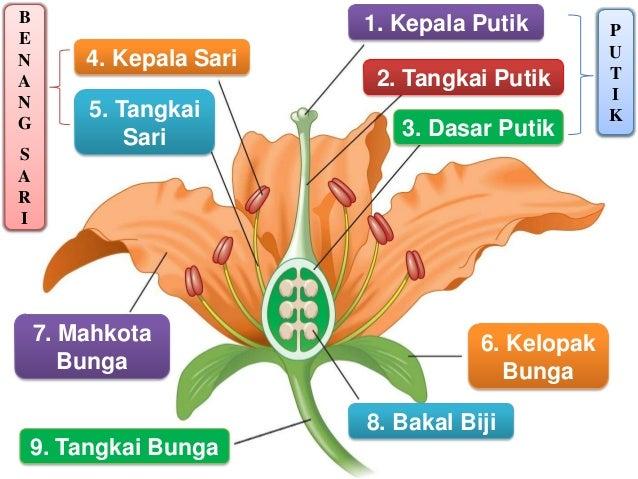 Bagian Bunga Dan Fungsinya