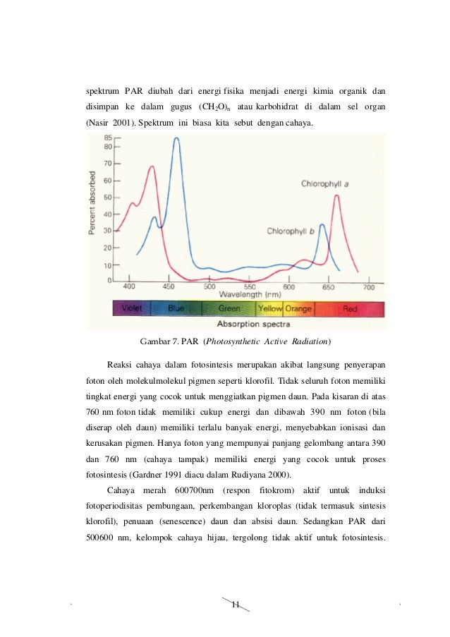 Bahan Ajar Model Connected Materi Fotosintesis