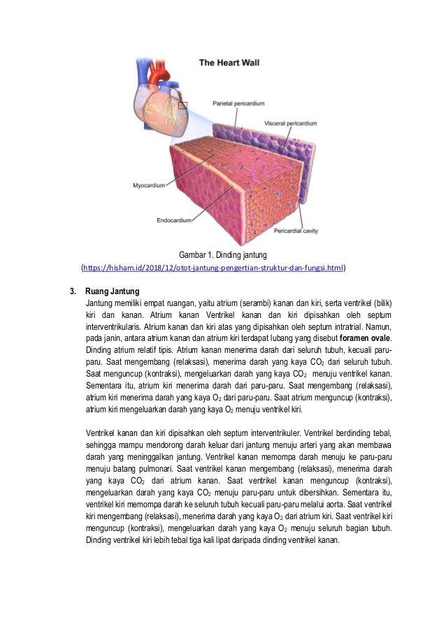 Bahan ajar organ peredaran darah