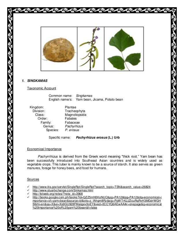 1. SINGKAMAS Taxonomic Account Common name: Singkamas English name/s: Yam bean, Jicama, Potato bean Kingdom: Plantae Divis...