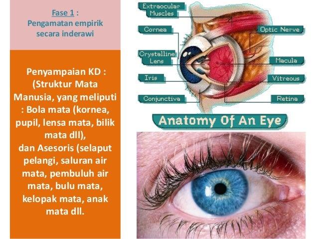 Fase 1 : Pengamatan empirik secara inderawi Penyampaian KD : (Struktur Mata Manusia, yang meliputi : Bola mata (kornea, pu...