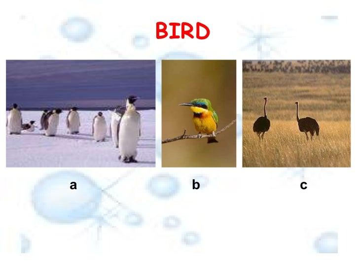 BIRD a b c