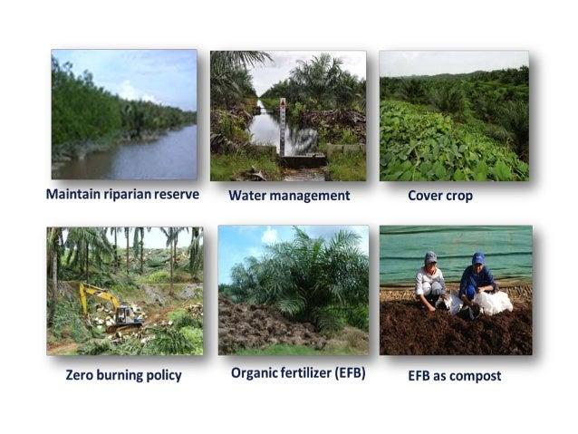  Menggalakkan pertumbuhan mikroorganisma baik yang memastikan kesuburan jangka panjang tanah.  Kandungan baja organik ya...