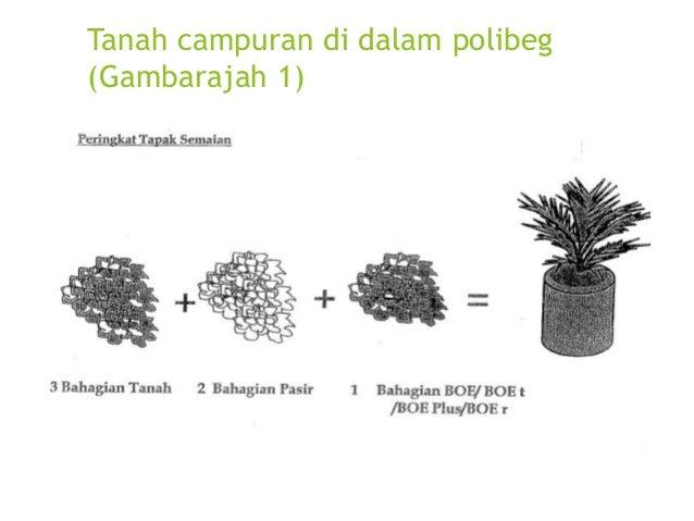 Kawasan rata dan beralun bagi sawit matang muda 1-3 tahun bagi tanah marginal. (Gambarajah 4)