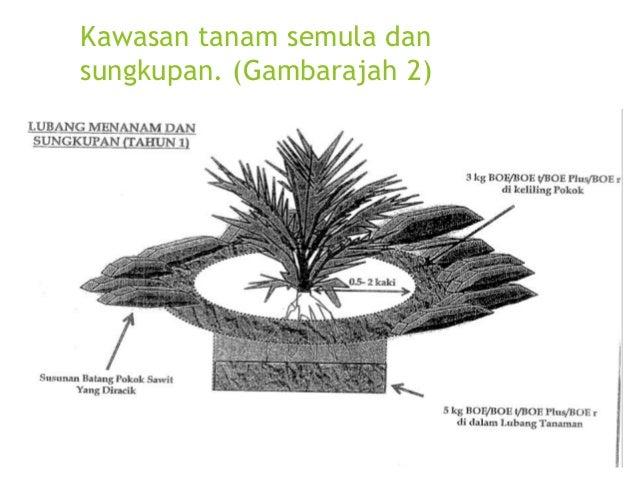 Kawasan berteres bagi sawit matang berumur 4-15 tahun bagi tanah subur. (Gambarajah 5)