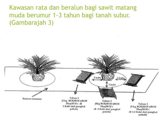 Kawasan rata dan beralun bagi sawit matang muda 4-15 tahun. (Gambarajah 7) 20kg BOE/BOE t/BOE Plus/BOE r/1 pokok