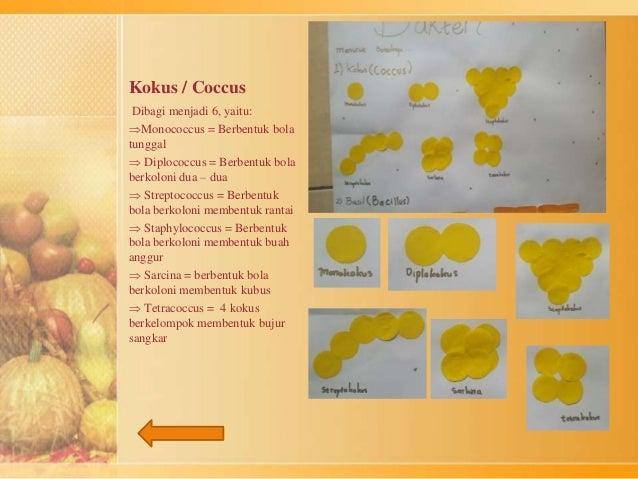 Kokus / Coccus  Dibagi menjadi 6, yaitu:  Monococcus = Berbentuk bola  tunggal   Diplococcus = Berbentuk bola  berkoloni...