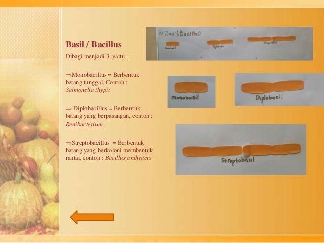 Basil / Bacillus  Dibagi menjadi 3, yaitu :  Monobacillus = Berbentuk  batang tunggal. Contoh :  Salmonella thypii   Dip...