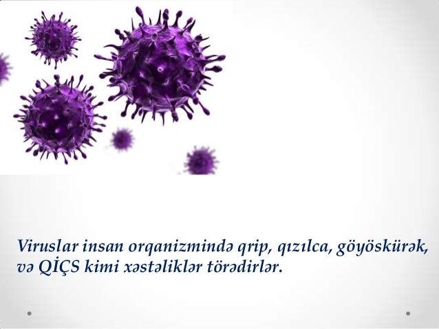 Bakteriyaların rolu. viruslar