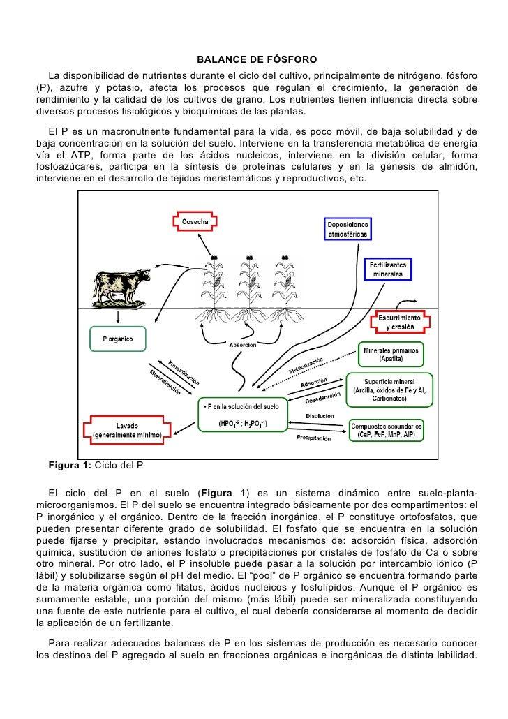 BALANCE DE FÓSFORO    La disponibilidad de nutrientes durante el ciclo del cultivo, principalmente de nitrógeno, fósforo (...