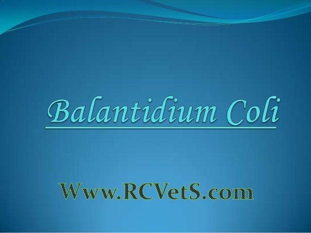 Balantidium coli is a parasitic species of ciliate protozoan responsible for the disease Balantidiasis. Balantidium coli i...