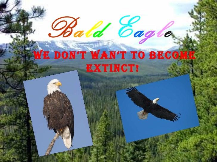 B a l d  E a g l e WE DON'T WAN'T TO BECOME EXTINCT!