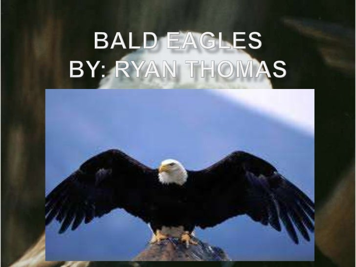 What do the Bald Eagle look like?The bald Eagle has a blackish brown back, and awhite head, neck, and tail. They have yell...