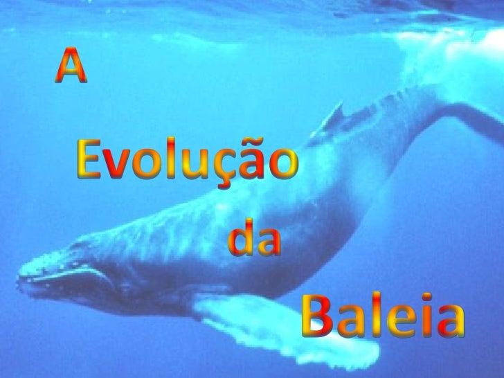 A Evolução da Baleia  As Baleias surgiram aproximadamente há  60M.a. Os ancestrais das baleias actuais eram  terrestres.