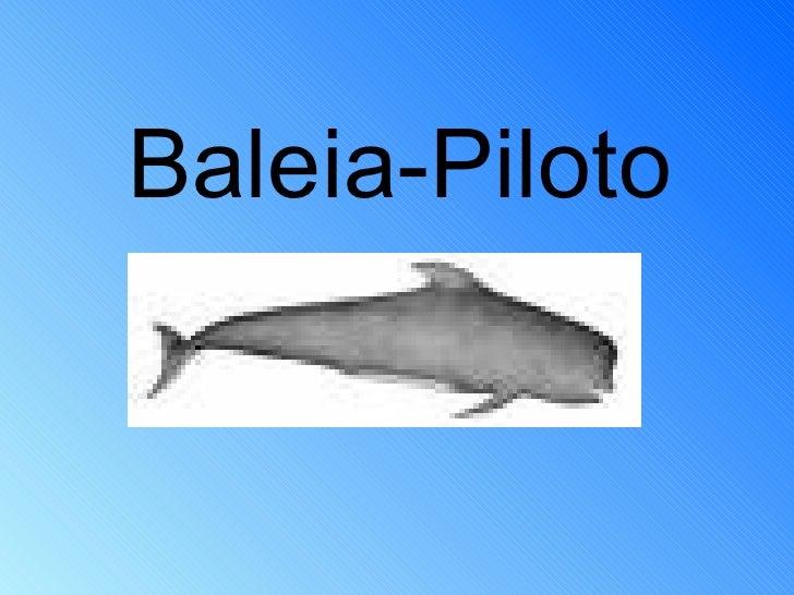 Baleia-Piloto