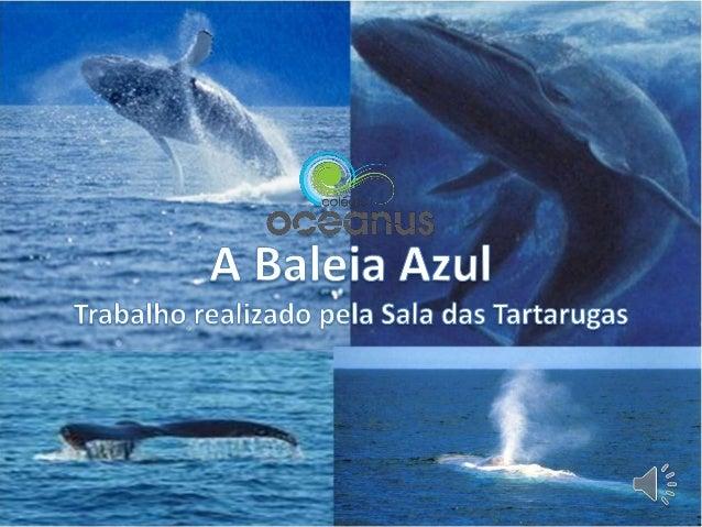 • Gostei de ver a baleia a por a cauda fora de água. Maria• A baleia pequenina é mais pesada que um elefante. Margarida• A...