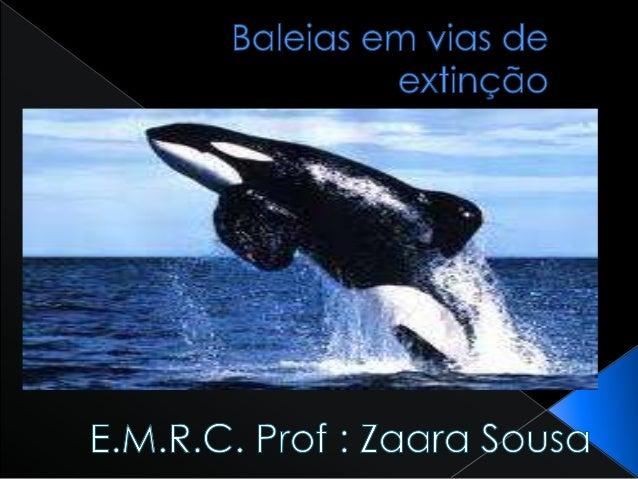  A baleia azul é um dos maiores animais no mundotambém é o animal mais ruidoso do mundo.Emitem sons que atingem os 188 de...