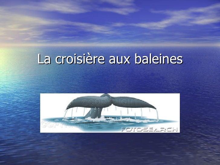 La croisière aux baleines