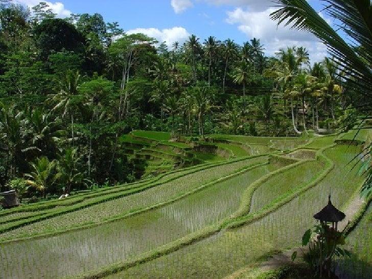 Bali Slide 47