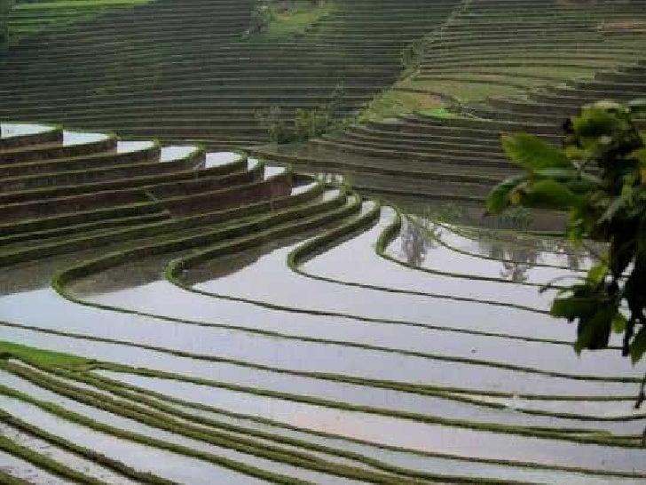 Bali Slide 9