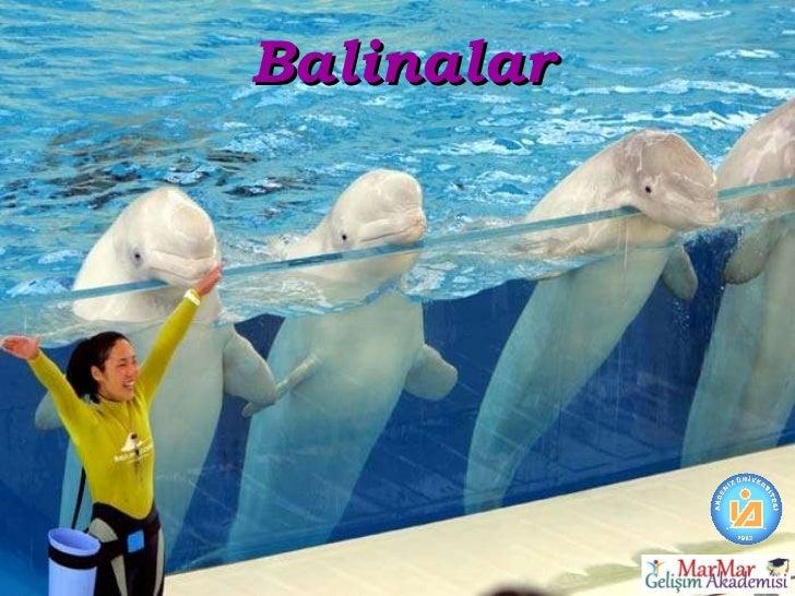 Balinalar
