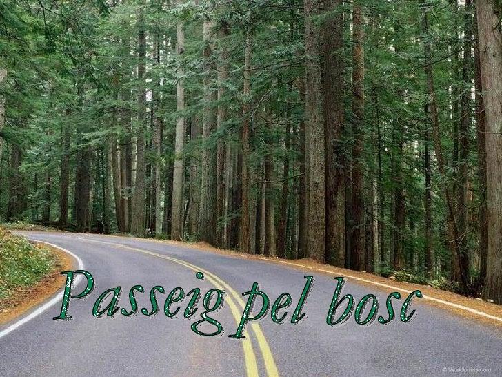 Passeig pel bosc