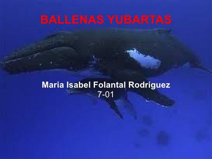 BALLENAS YUBARTAS Maria Isabel Folantal Rodriguez 7-01