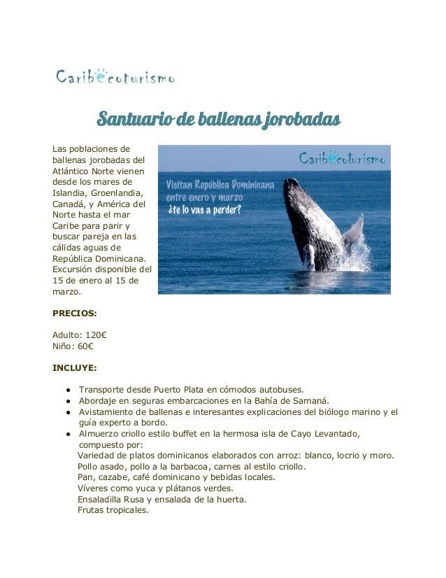 Santuario de ballenas jorobadas Las poblaciones de ballenas jorobadas del Atlántico Norte vienen desde los mares de Island...