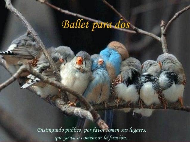 Ballet para dos  Distinguido público, por favor tomen sus lugares, que ya va a comenzar la función...