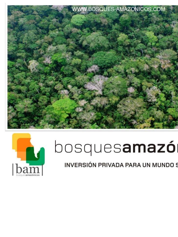 WWW.BOSQUES-AMAZONICOS.COM