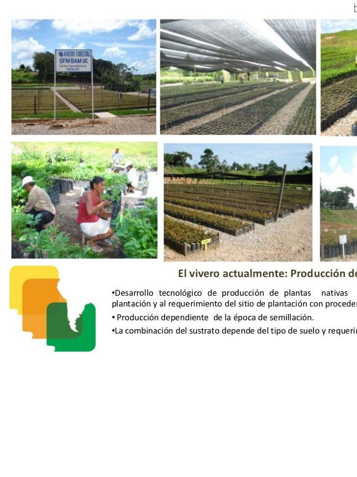 Bam proyecto de reforestaci n con especies nativas de for Vivero plantas nativas
