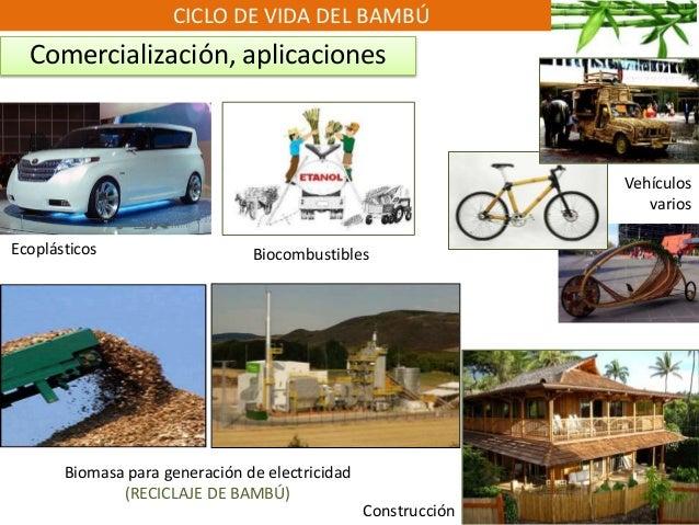 CICLO DE VIDA DEL BAMBÚ Comercialización, aplicaciones Ecoplásticos Biomasa para generación de electricidad (RECICLAJE DE ...