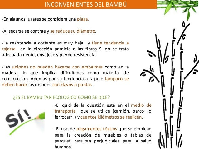 INCONVENIENTES DEL BAMBÚ -En algunos lugares se considera una plaga. -Al secarse se contrae y se reduce su diámetro. -La r...