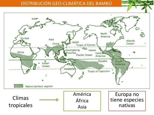 DISTRIBUCIÓN GEO-CLIMÁTICA DEL BAMBÚ Climas tropicales América África Asia Europa no tiene especies nativas