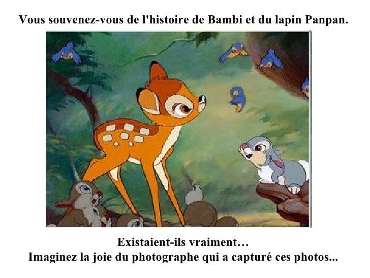 Vous souvenez-vous de l'histoire de Bambi et du lapin Panpan. Existaient-ils vraiment… Imaginez la joie du photographe qui...