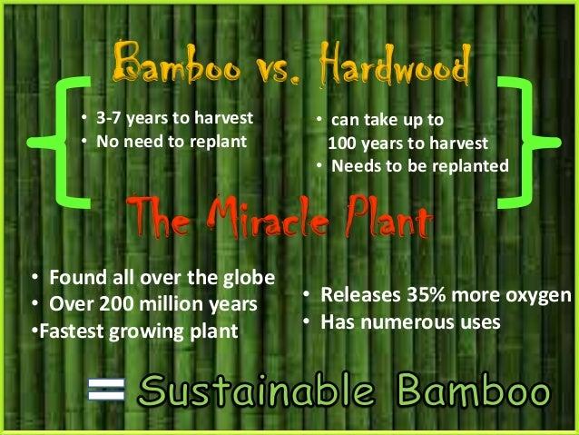 bamboo is a grass