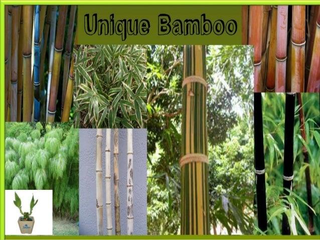 bamboo business plan
