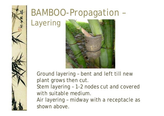 BeNotBamboo, size:.;producer_color:bamboo smoke