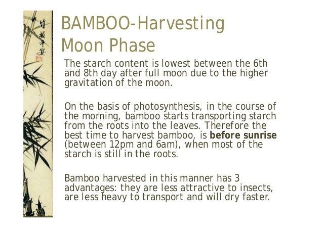 BAMBOO Felling ...