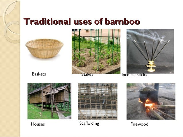 Bamboo Amp Its Uses