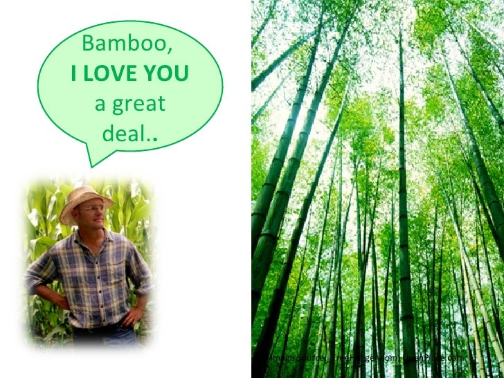 The Legend of Bambo
