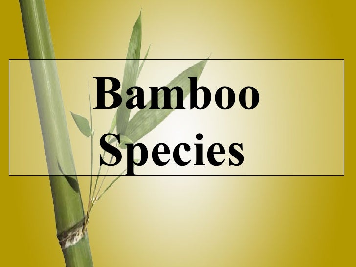 Bamboo Species In India