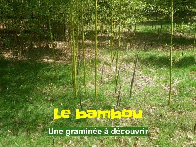 Description du bambou Une forêt de bambous devrait s'appeler une prairie, même quand elle s'élève à vingt mètres de haut p...